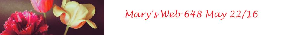 Mary's Web May 22/16